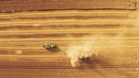 Aerial/Drone footage of a combine harvester, assisted by a tractor, gathering wheat in a British field (4K)