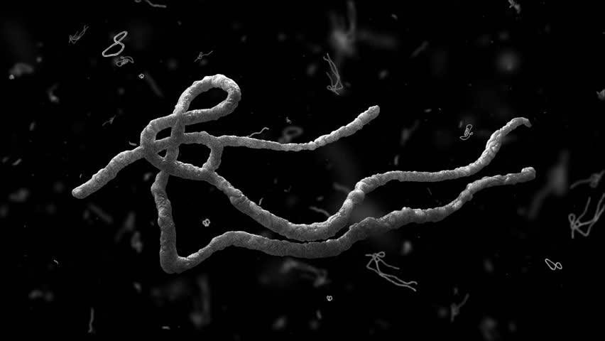 High quality 3D model of virus or worms. This video can be used to show the Ebola or nematodes. In the center of a large element near the small. Seamless loop. Check my portfolio to see other videos.