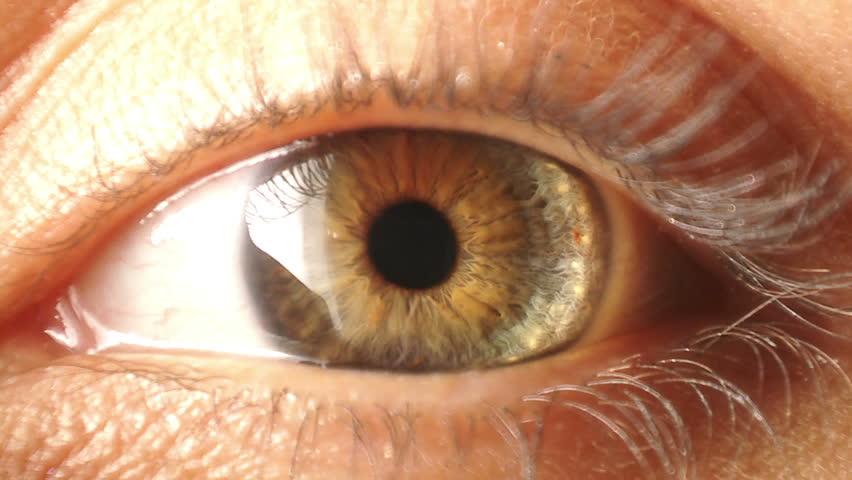 Eye iris contracting #2394440