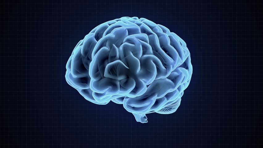 Human brain loop rotation 3d