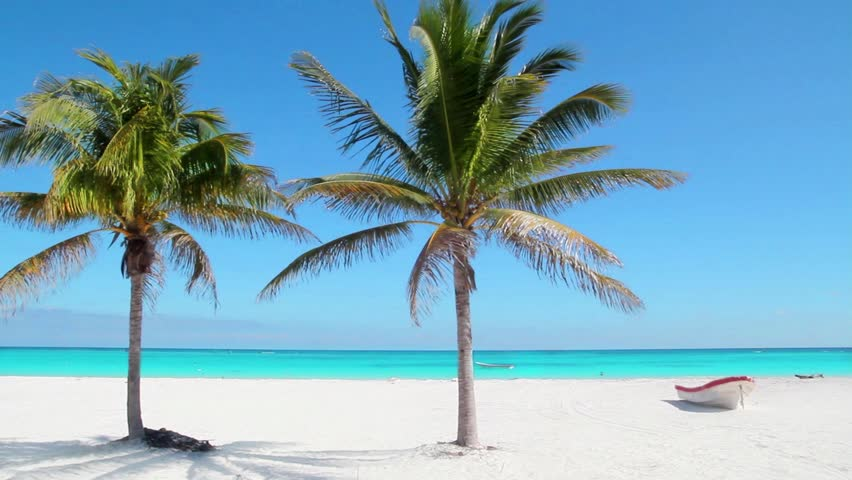 Palm tree free video clips 680 free downloads caribbean tulum white sand beach with two palm trees and boat voltagebd Image collections