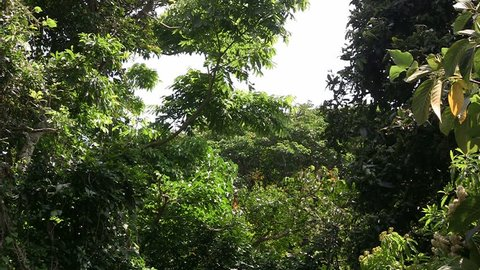 Dense tropical Asian jungle with giant butterflies