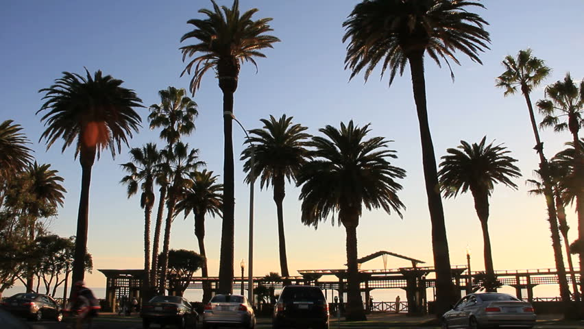 Palm Trees line Ocean Blvd in Santa Monica, CA. Traffic and Activity at sunset hour  | Shutterstock HD Video #2431310