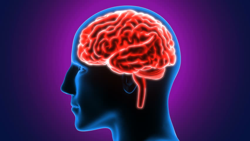 3d Render Of Human Brain Stock Footage Video 100 Royalty Free