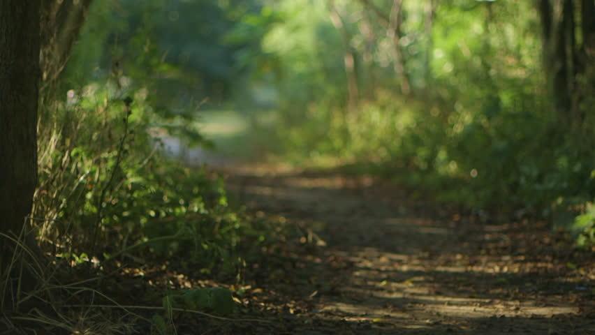 Rack focus shot across a small forest path  | Shutterstock HD Video #24455150