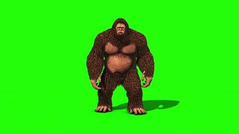 Bigfoot Sighting Eats Front Green Screen 3D Rendering Animation