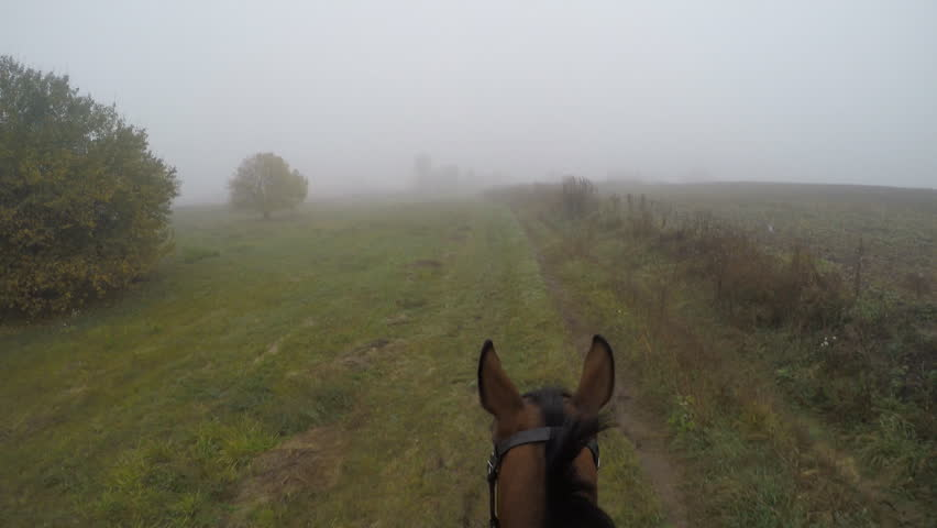 First person view of riding a horse. Point of view of rider walking at stallion at nature. Pov motion. Close up | Shutterstock HD Video #24631289
