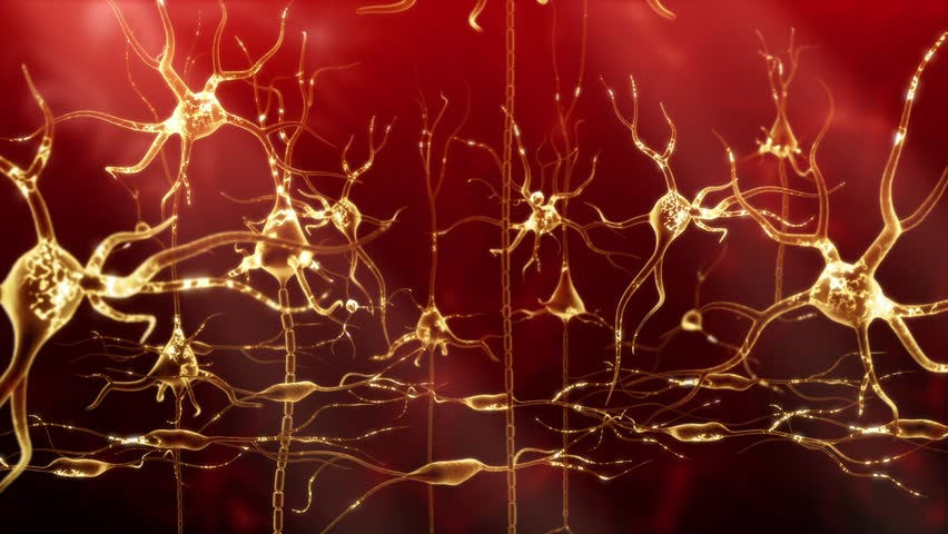 Neuronal Activity Zoom Red