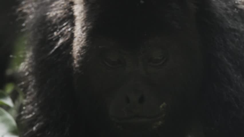 Monkey eating in the jungle   Shutterstock HD Video #24746180