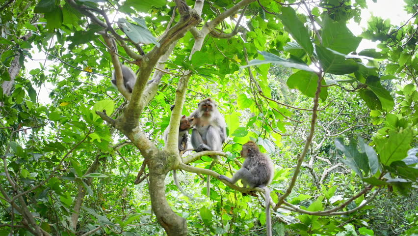 Cute monkeys on trees