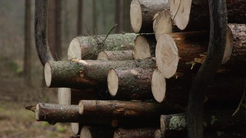 CLOSE UP, DOF: Transporting stack of cut, delimbed and felled tree trunks loaded on logging trailer from the woods. Tractor moving gathered logs to the road to be lifted on trucks for transportation