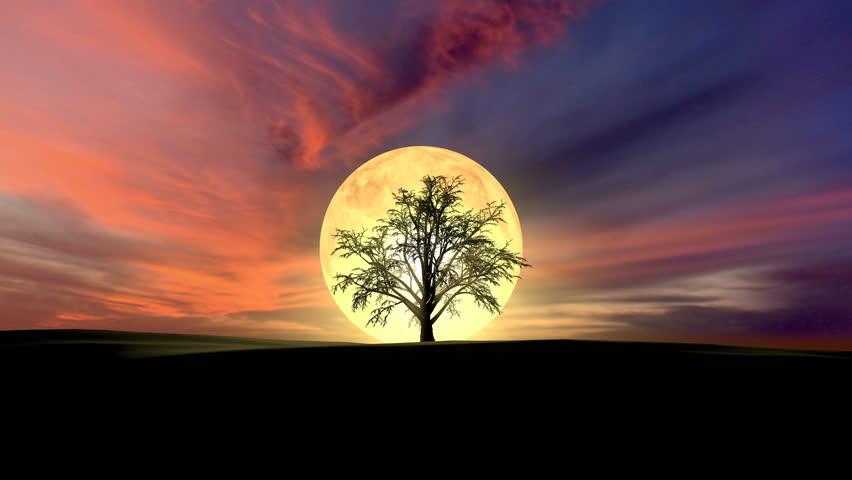 Growing tree at sunrise 3d rendering    Shutterstock HD Video #24824768