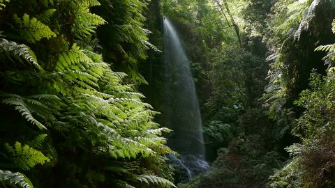 """Waterfall """"The Lindens"""" with giant ferns and big falling water, on the island of La Palma, Canary Islands, Spain."""