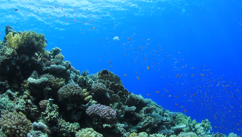 Coral Reef scene with numerous tropical fish coming into the frame