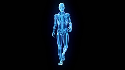 X-Ray of human 3D model walking with matte key included