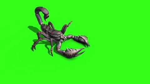 Animal Scorpio Walk Side Green Screen 3D Rendering