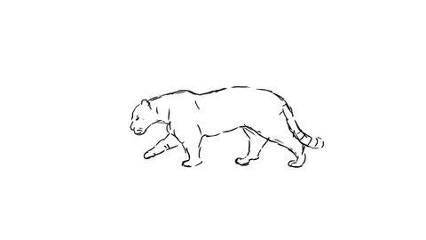 Walking feline, hand drawn loop animation