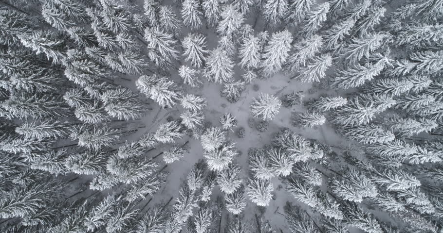 Aerial flyover frozen snowy spruce forest