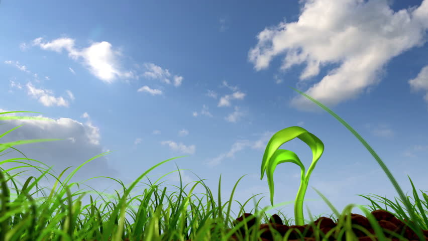 growing plant against sky background, 3d animation #2557094
