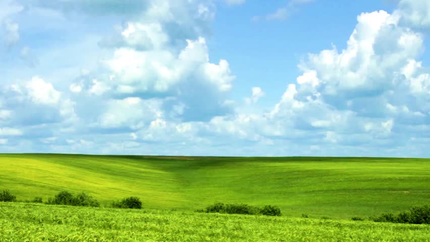 Large green wheat field with rain clouds and blue sky. Time lapse.