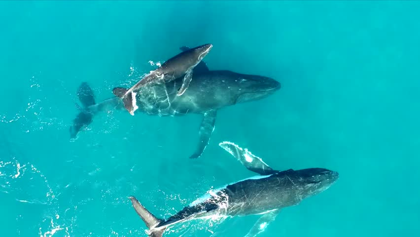 Whales in the ocean | Shutterstock HD Video #25630670