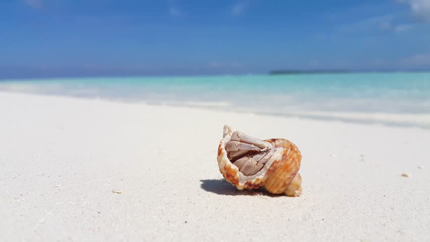v01737 Maldives beautiful beach background white sandy tropical paradise island with blue sky sea water ocean 4k hermit crab