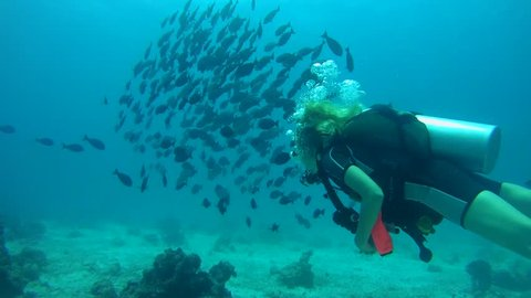 INDIAN OCEAN, MALDIVES - MARCH 2017: Young woman scuba diver swims in school of fish Yellowfin Surgeonfish (Acanthurus xanthopterus), Indian Ocean, Maldives
