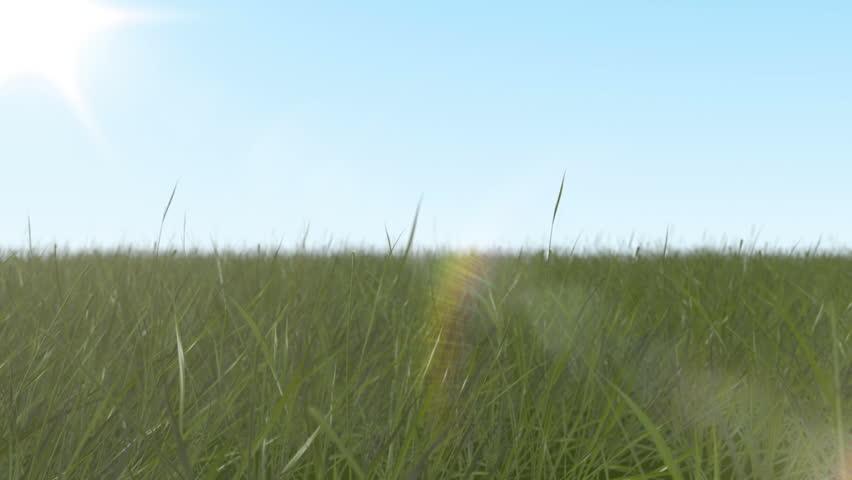 camera through fresh spring grass blue sky and sun background.