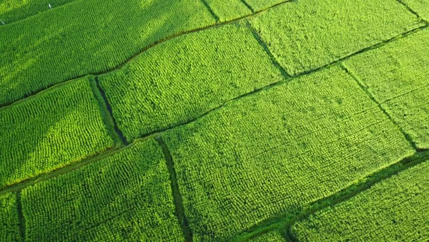 Flying over the rice fields in Bali | Shutterstock HD Video #25756580