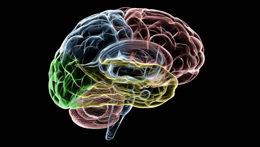 Animated X Ray Of A Brain With The Different Areas Highlighted To