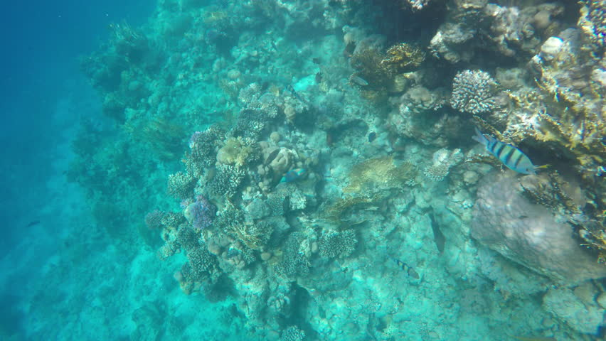 Many different fish swim near coral reefs. Sinai Egypt #26020310