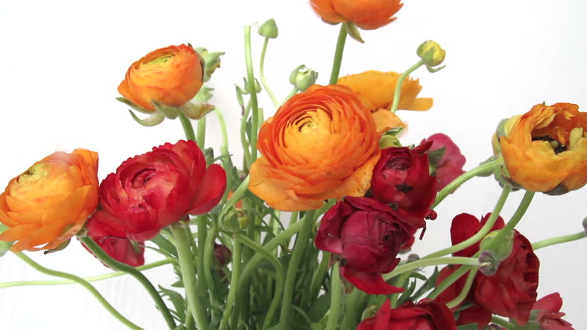 Header of Ranunculus