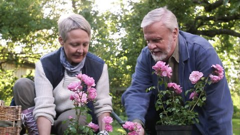 An old couple in the garden