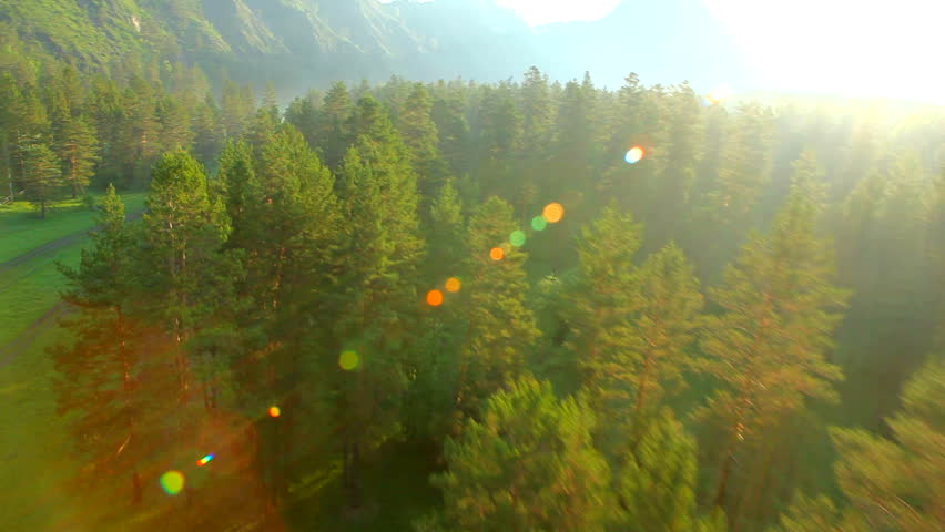 flight above forest