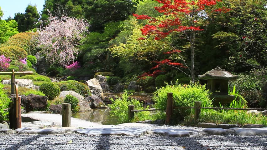 Japanese Garden With Cherry Blossoms In Kyoto, Japan   HD Stock Video Clip