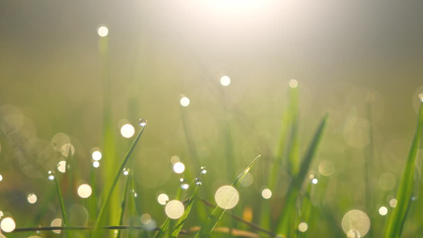 Abstract shot of wet green grass with dew drops in morning lights   Shutterstock HD Video #26173850