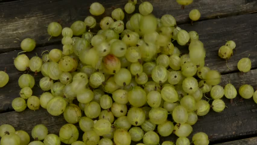 A basket of fresh gooseberries being poured on to a table