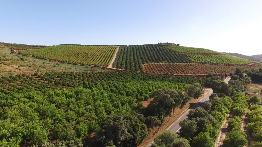 Orange, lemon trees and grape plantations. Agriculture in the south of Portugal, the Algarve.