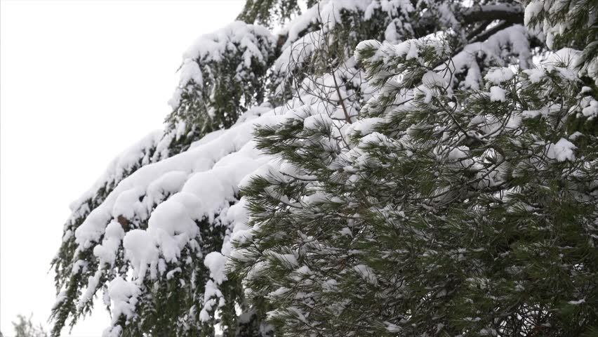 Falling snow in a winter park with snow covered trees | Shutterstock HD Video #26574890