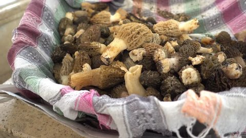 4K Natural organic thimble morel mushrooms on a piece of cloth