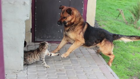 Cat runs from dog/dog attacks the cat and the cat runs away from the tree dog