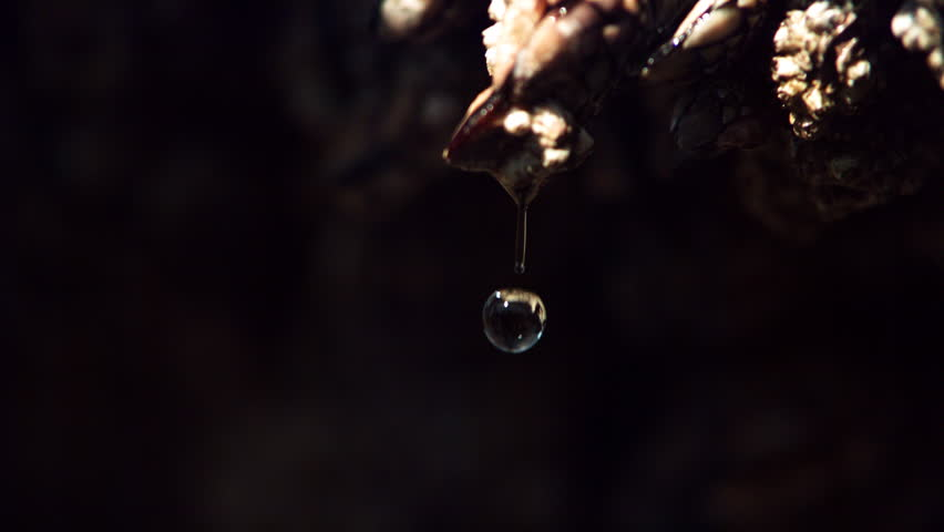 Close-up barnacle with water drop falling in ultra-slow motion