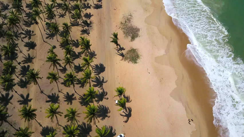 Aerial reveal of Porto de Galinhas Beach at Pernambuco - Brazil. Flying over coconuts trees and beach.    Shutterstock HD Video #26687230