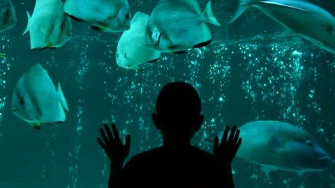 BOY IN AQUARIUM WATCHING UNDERWATER-WORLD LIFE OF BIG FISH
