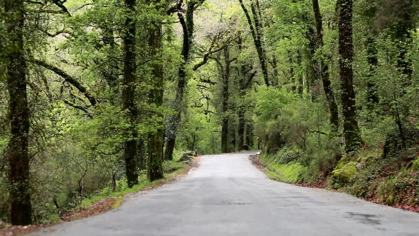 Road in the green spring forest. Sound of birds singing. - HD stock footage & A Beautifully Eerie Dirt Road With Tree Canopy Covered In Spanish ...