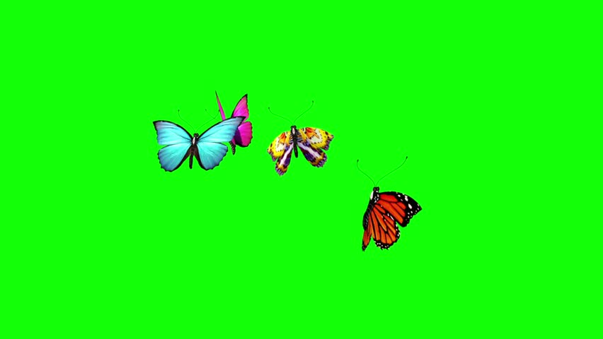 Group of Butterflies Flying Green Screen 3D Rendering Animation