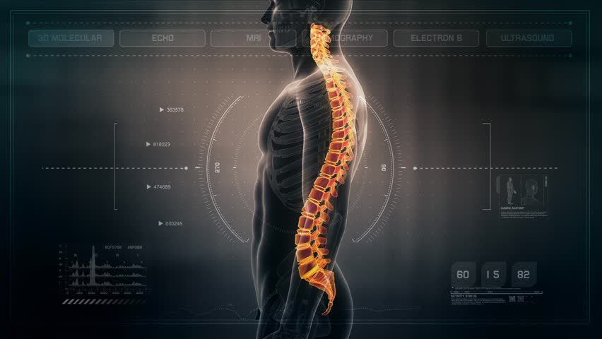 Anatomy of Human Male Spinal Stock Footage Video (100% Royalty-free ...
