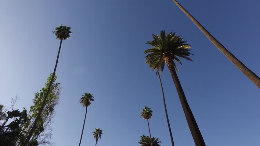 Typical Beverly Hills street view with Palm Trees