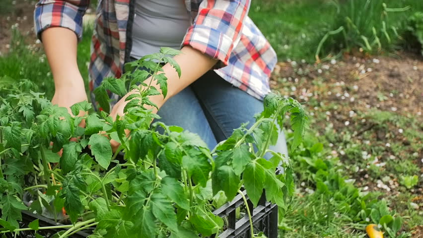 slow motion video of young woman working in garden and planting vegetable seedlings hd stock
