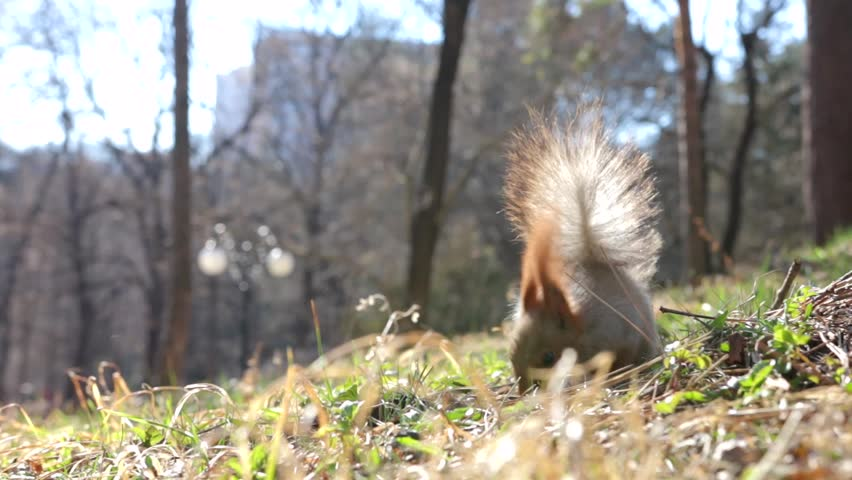 Squirrel eating nuts in the Park